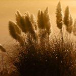 Le Centre de Soins Naturels du Chablais